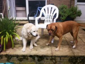 Benji & Millie